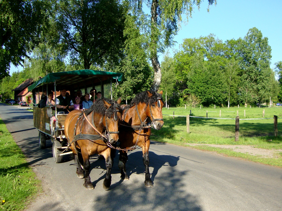 Carriage ride for young and old, for example to the Grundlosen See, Ringhotel Forellenhof in Walsrode, 4-stars Hotel in the Lueneburger Heide
